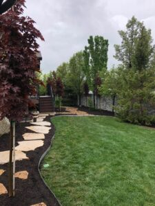 Back Yard Landscape and Plantings
