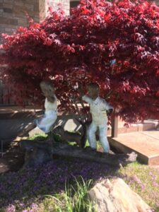 Statue Bloodgood Japanese Maple